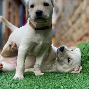 1-3 Month Male Purebred Labrador Retriever | Dogs & Puppies for sale in Nairobi, Kasarani