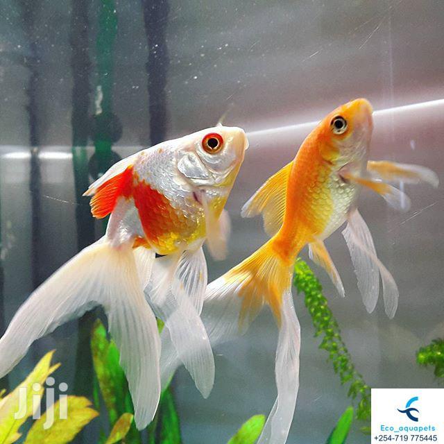Archive: Beautiful Aquarium Fish