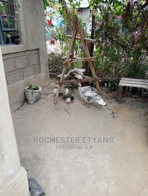 Turkey Poults One Month Old | Birds for sale in Machakos, Matungulu