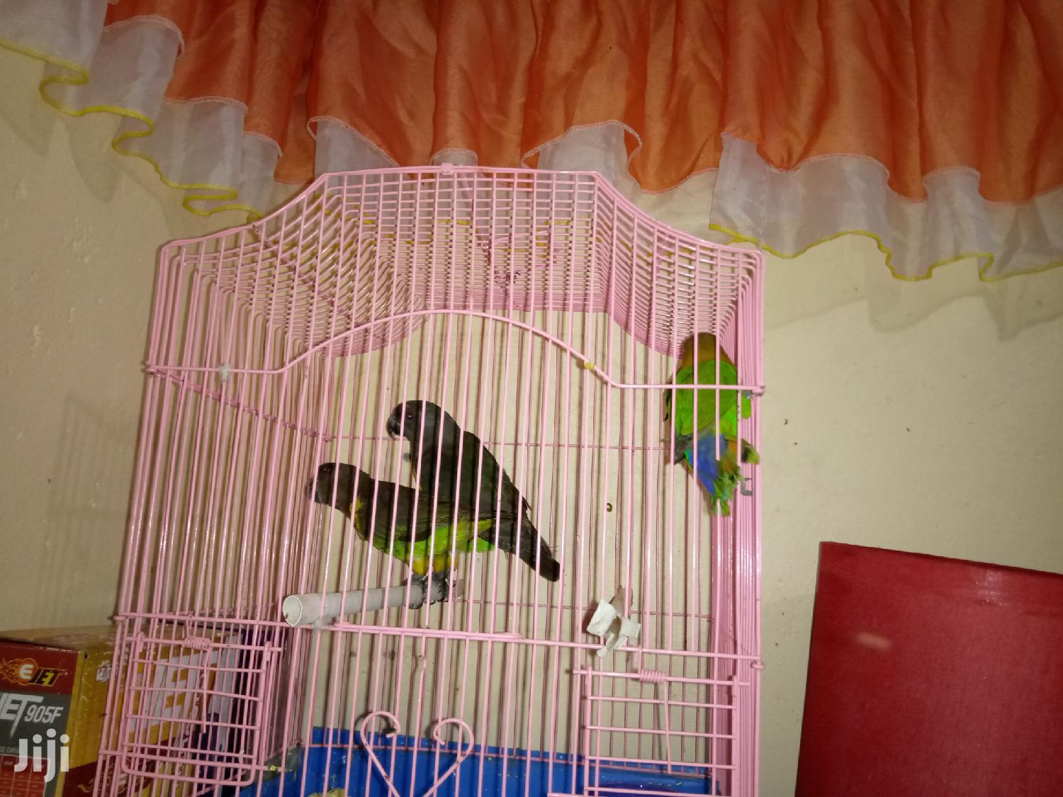 Birds Cages | Pet's Accessories for sale in Nairobi Central, Nairobi, Kenya
