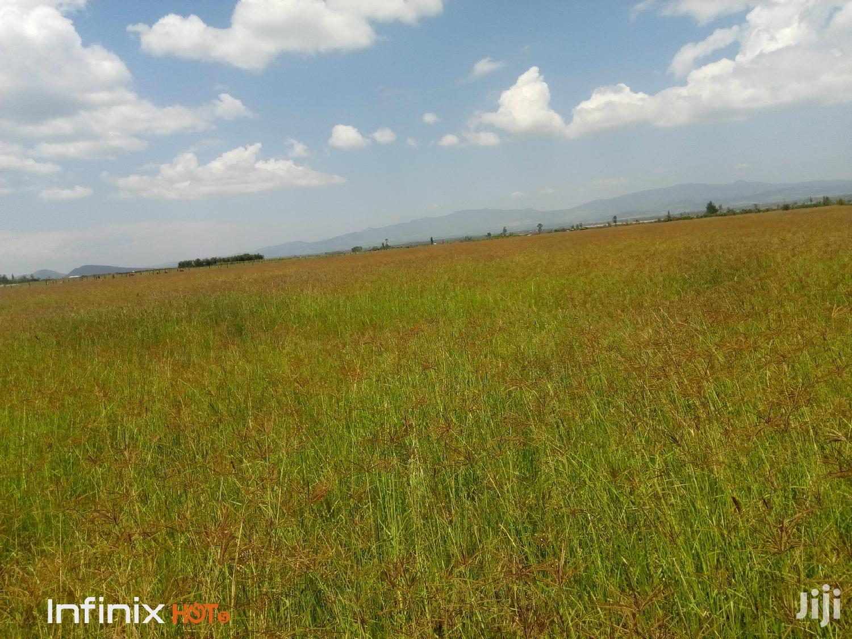 Boma Rhodes Grass Seeds | Feeds, Supplements & Seeds for sale in Nakuru East, Nakuru, Kenya