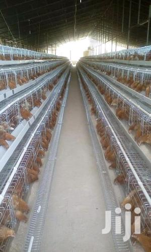 1280 Chicken Cages   Farm Machinery & Equipment for sale in Nairobi, Nairobi Central