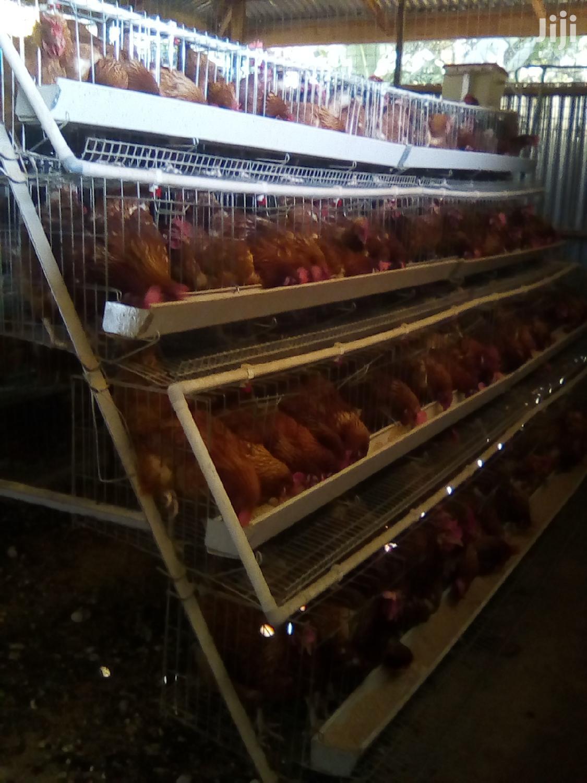 Chicken Cages   Farm Machinery & Equipment for sale in Kamulu/Joska (Kasarani), Nairobi, Kenya