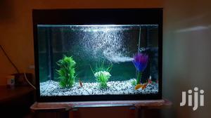Classy Aquarium