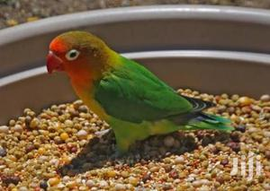 Lovebirds Cage | Pet's Accessories for sale in Mombasa, Kisauni