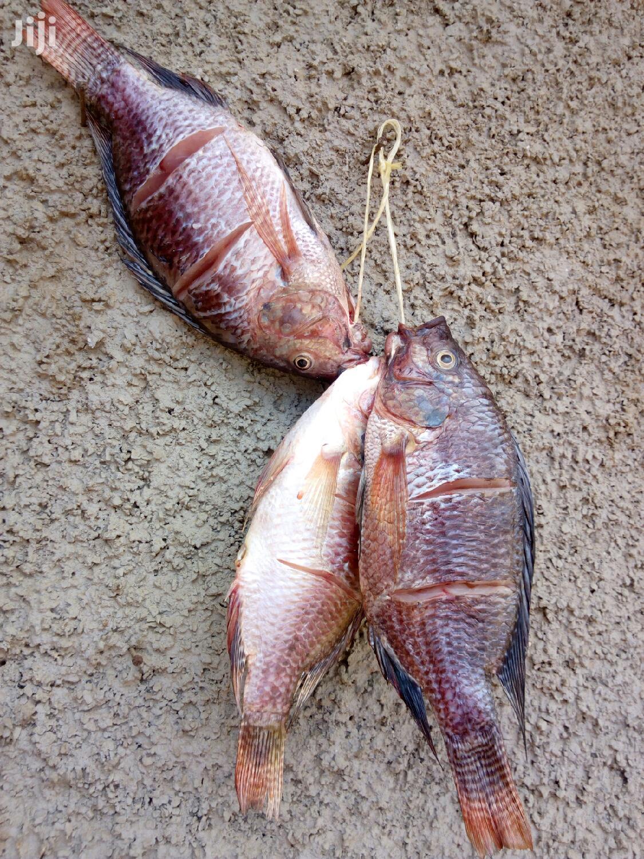 Archive: Fish Supplier