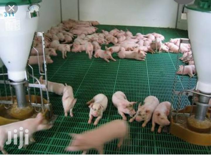 High Quality Pig Nipple Drinkers   Farm Machinery & Equipment for sale in Imara Daima, Nairobi, Kenya