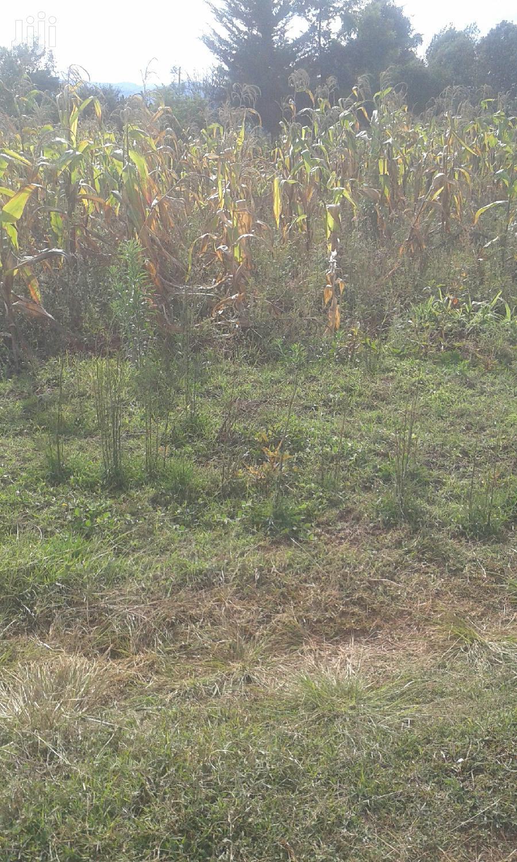 1/4 Acre, Kabendera, Ihururu, Nyeri. | Land & Plots For Sale for sale in Dedan Kimanthi, Nyeri, Kenya