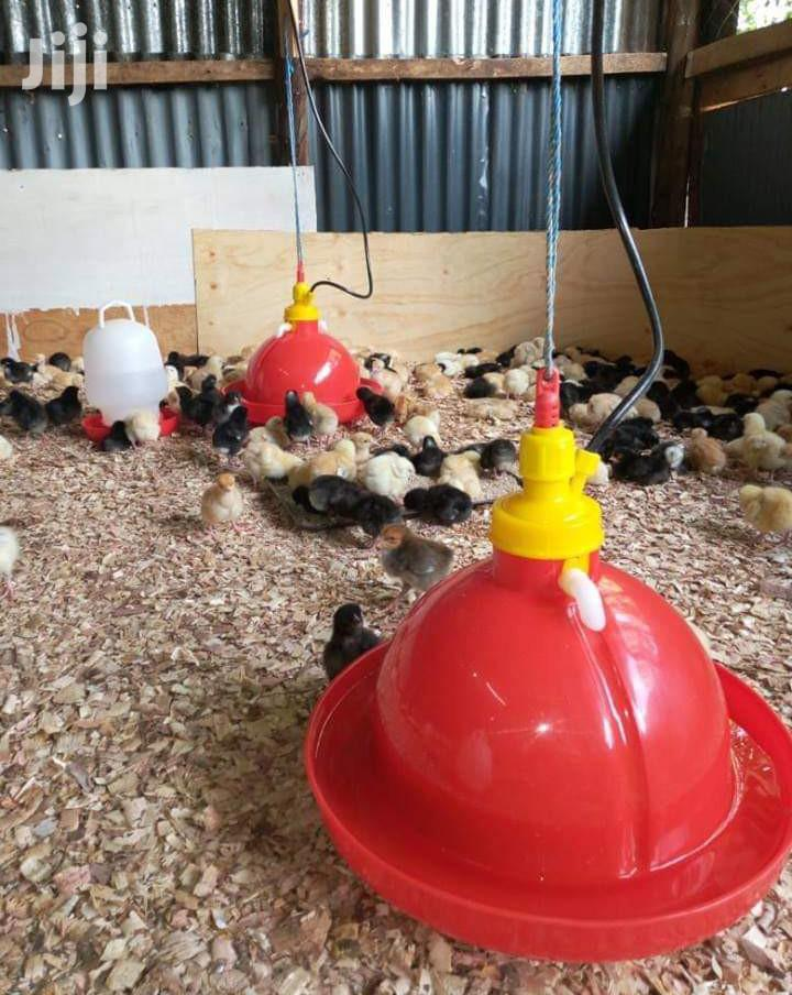Automatic Bell Drinkers For Chicken