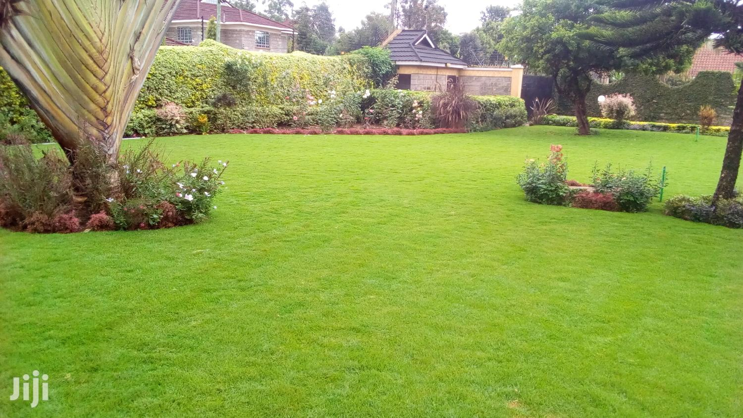 Arabic Grass, We Supply And Plant