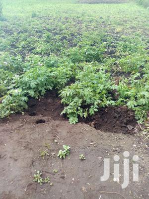5acre at Githabai on Sale   Land & Plots For Sale for sale in Nyandarua, North Kinangop