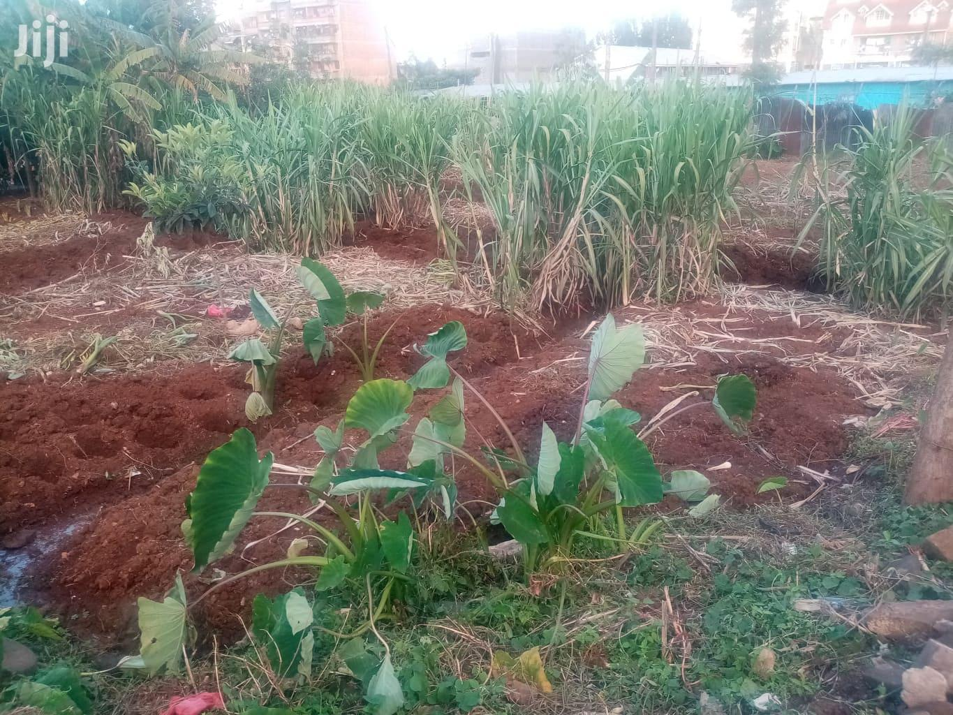 Plot for Sale Close to Half an Acre   Land & Plots For Sale for sale in Waithaka, Nairobi, Kenya