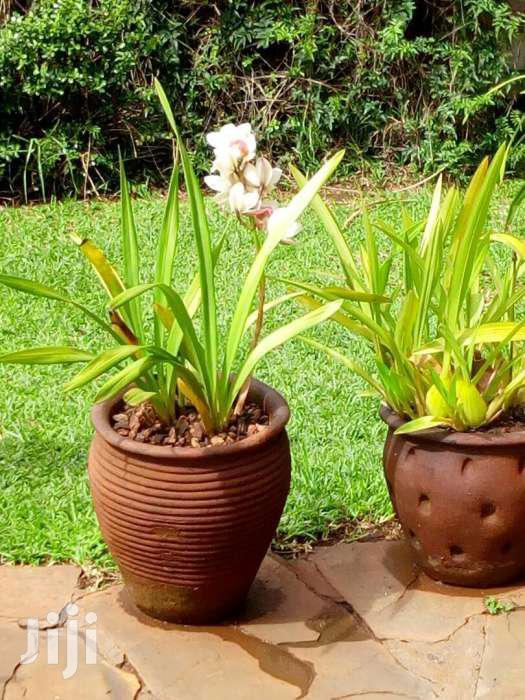 Landscaping And Garden Maintan