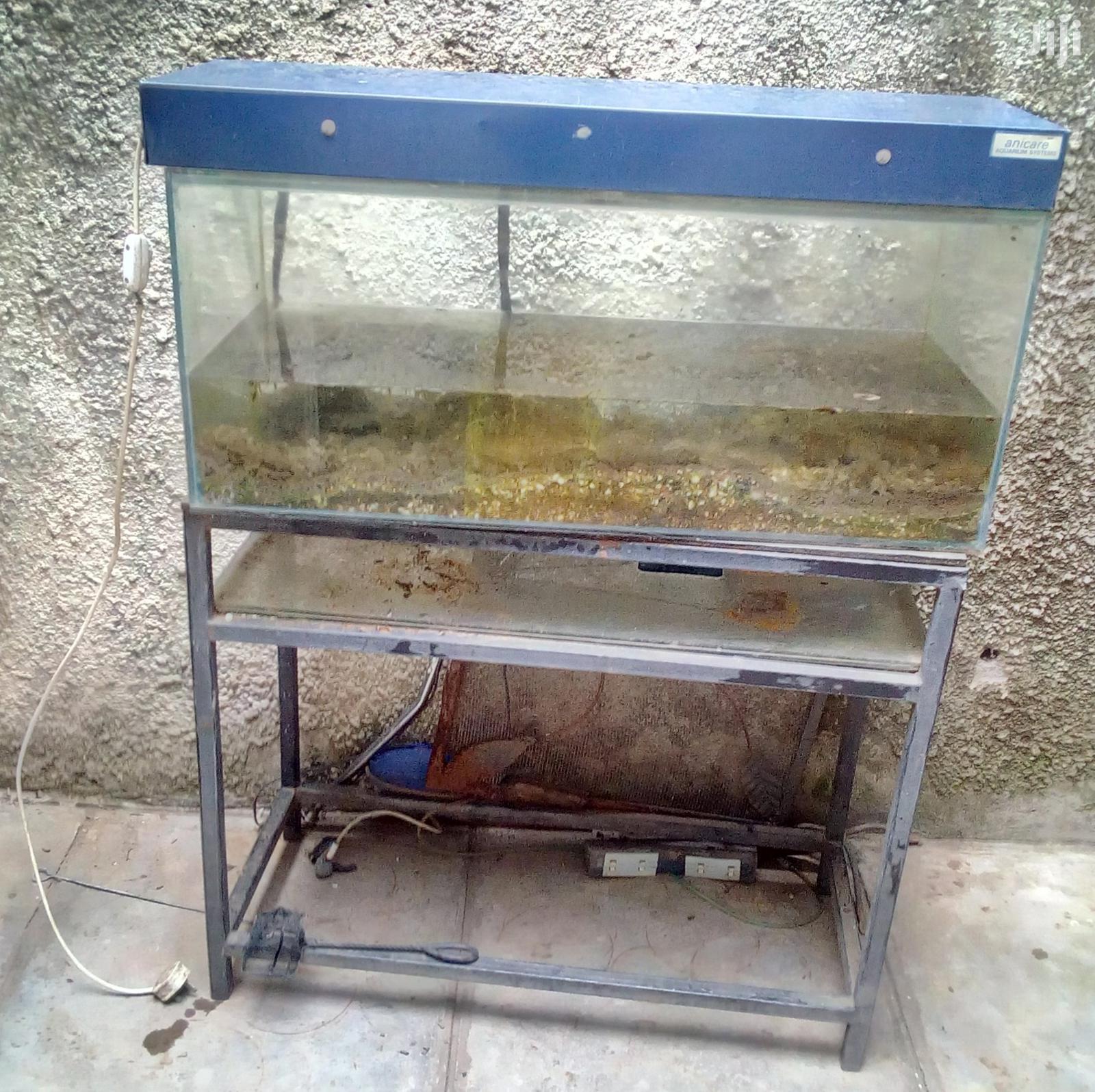 Archive: Fish Aquarium