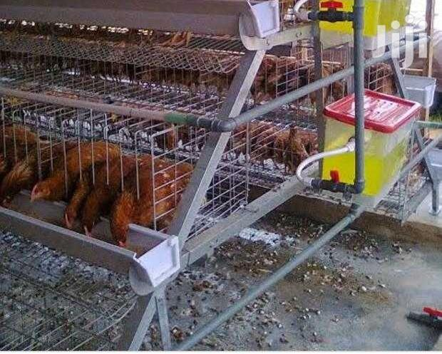 Archive: Electrogalvanised Chicken Cage
