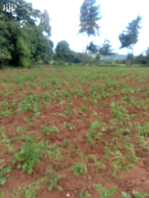 10 Acres Farmland