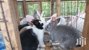 Rabbits For Pets   Livestock & Poultry for sale in Machakos, Syokimau