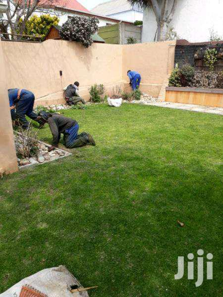 Indoor Plant Care Gardener