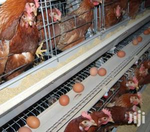 Electrogalvanised Chicken Cages   Farm Machinery & Equipment for sale in Mombasa, Kisauni