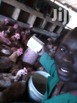 Farming & Veterinary CV | Farming & Veterinary CVs for sale in Turbo, Huruma