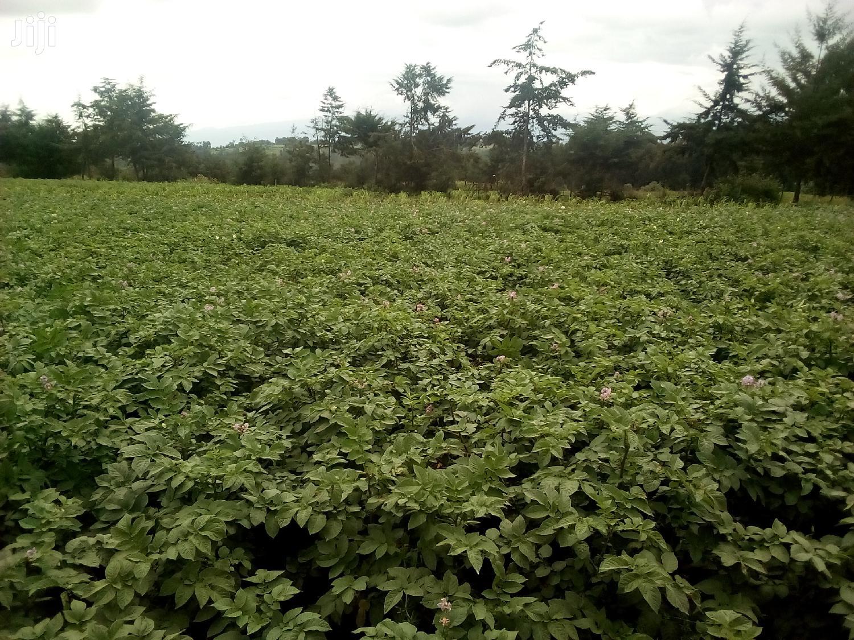 Shambas For Lease | Land & Plots for Rent for sale in Nakuru East, Nakuru, Kenya