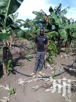 Farm Manager, Agronomist, Surveyors   Farming & Veterinary CVs for sale in Ainabkoi, Kaptagat