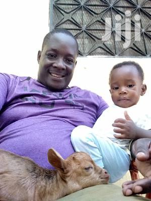 Peterson Odari   Other CVs for sale in Mombasa, Kisauni