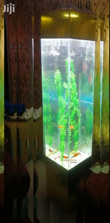 Archive: 5ft Tower Aquarium