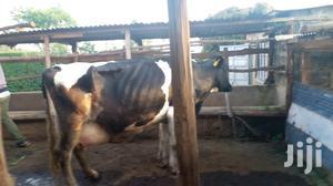 Pure Friesian | Livestock & Poultry for sale in Kiambu, Githunguri