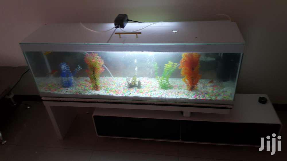 Customised Aquarium
