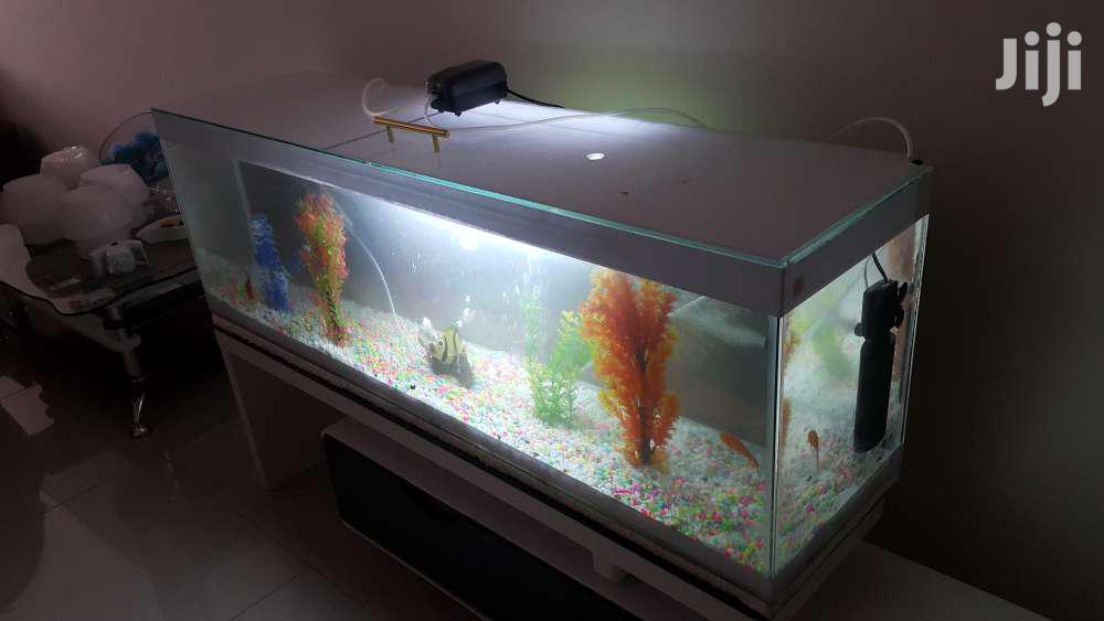 Customised Aquarium | Fish for sale in Mfangano Island, Homa Bay, Kenya