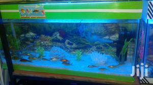 Aquarium Fish | Fish for sale in Nairobi, Embakasi