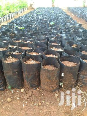 Nursery Planting Bags   Farm Machinery & Equipment for sale in Kapseret, Langas