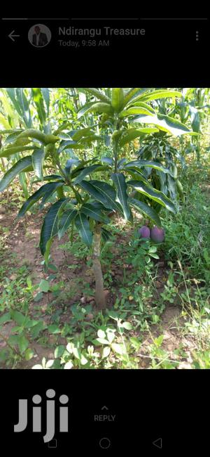 Makuyu Prime Plots for Sale | Land & Plots For Sale for sale in Murang'a, Makuyu