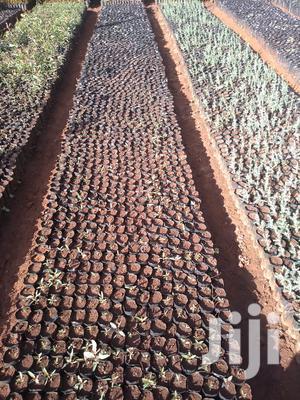 Planting Tubes   Farm Machinery & Equipment for sale in Mombasa, Kisauni