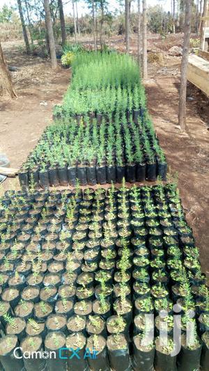 Sleeves ,Seedling Bags,Nursery Bags.   Farm Machinery & Equipment for sale in Nairobi, Nairobi Central