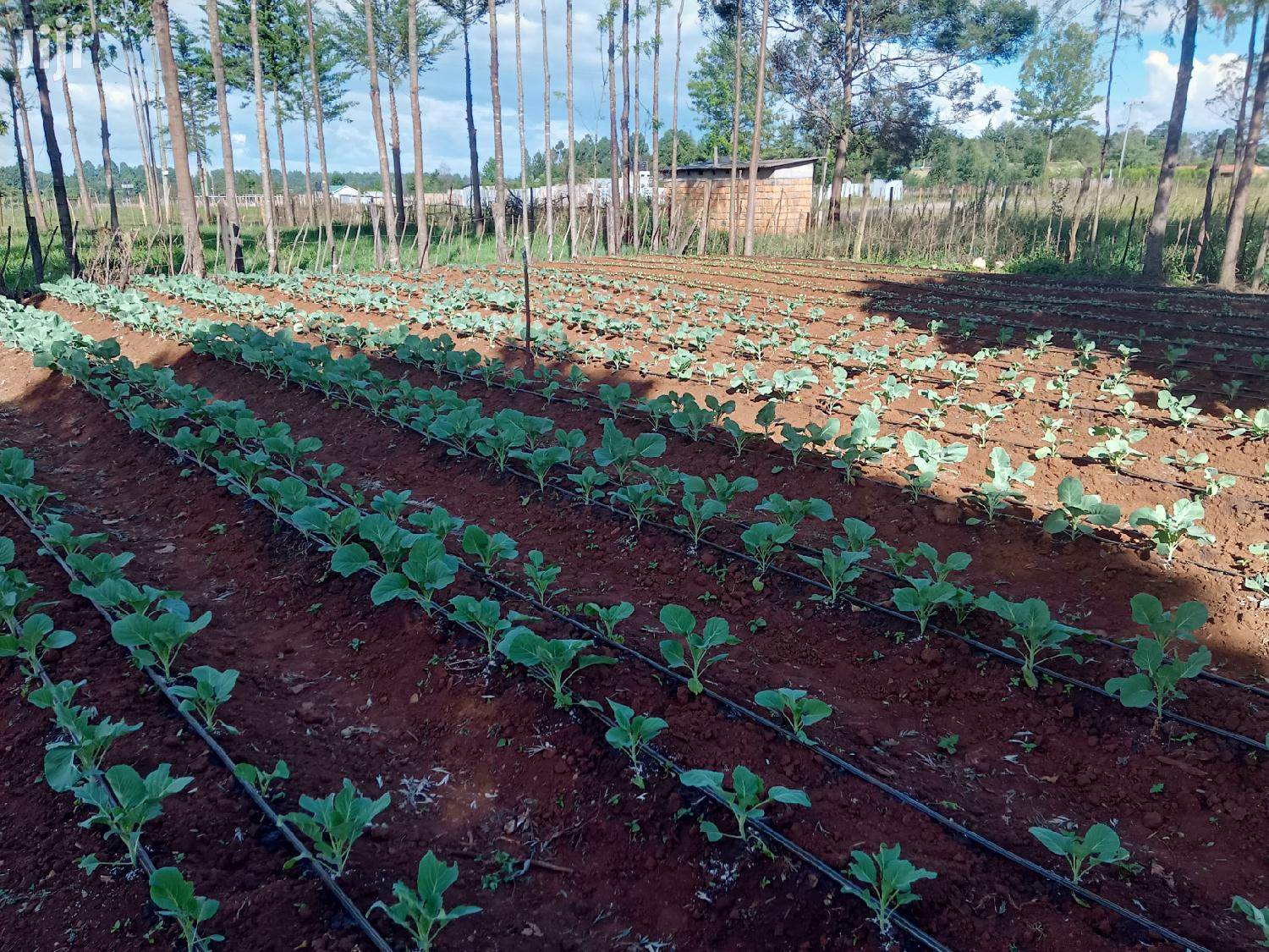 Affordable Drip Irrigation Kits For Eighth 1 4 Acre Plots Farms