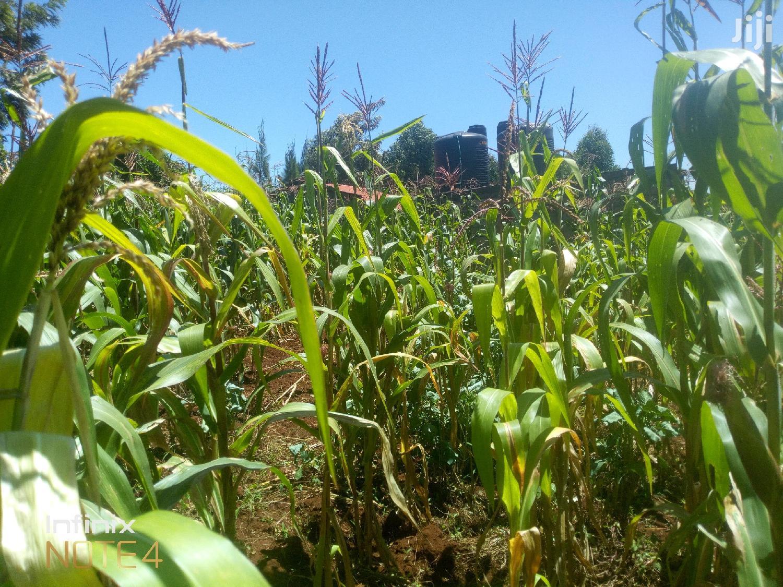 1/4 Acre Kikuyu Thamanda Kiambu County   Land & Plots For Sale for sale in Muguga, Kiambu, Kenya