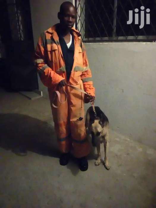 Dog Training   Pet Services for sale in Bamburi, Mombasa, Kenya