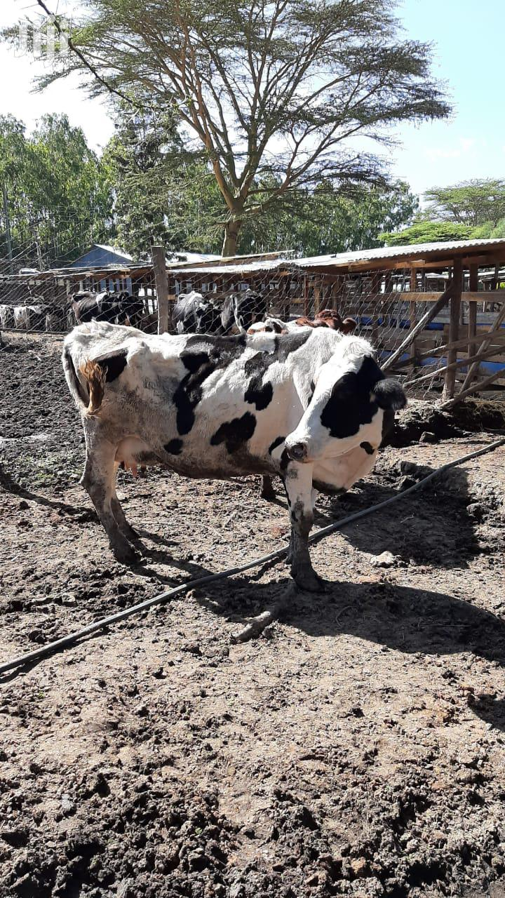 Cows That Recommended For Beef | Livestock & Poultry for sale in Nairobi West, Nairobi, Kenya
