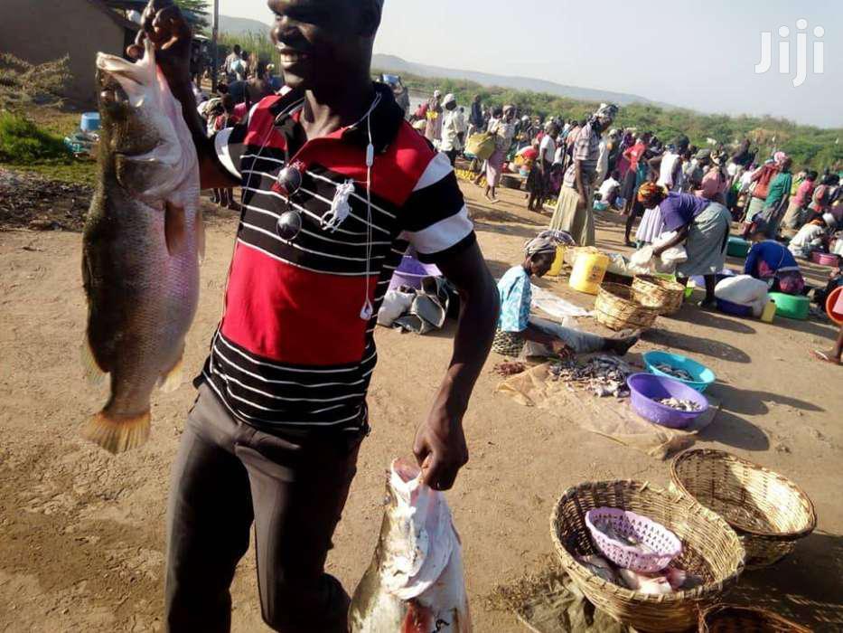 Tilapia Fingerlings On Sale | Meals & Drinks for sale in Karen, Nairobi, Kenya