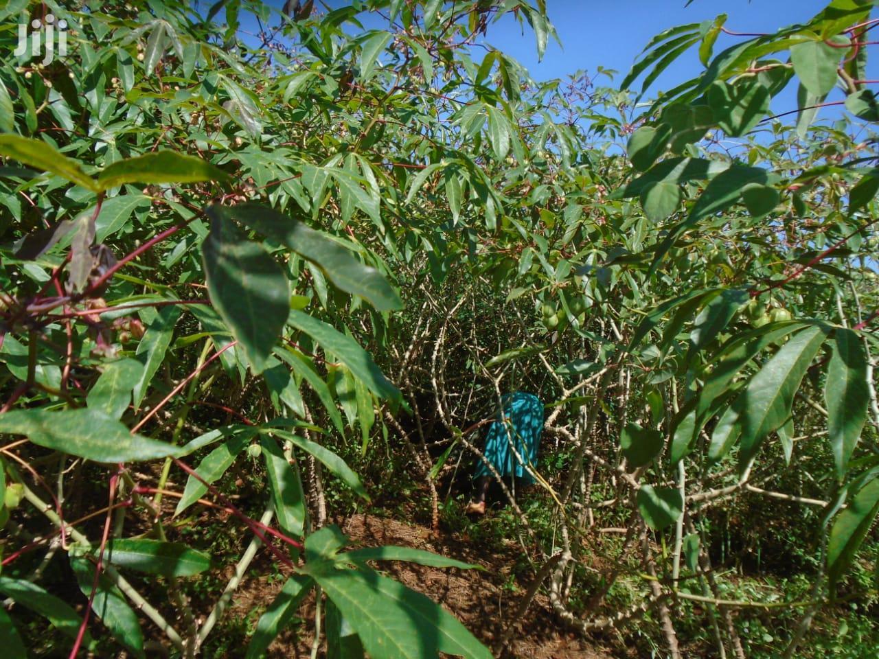 Cassava Cuttings | Feeds, Supplements & Seeds for sale in Gitaru, Kiambu, Kenya