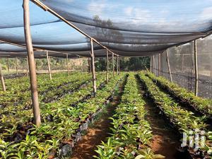 55% Shade Net For Sale In Kenya | GREKKON LTD | Farm Machinery & Equipment for sale in Kapseret, Langas