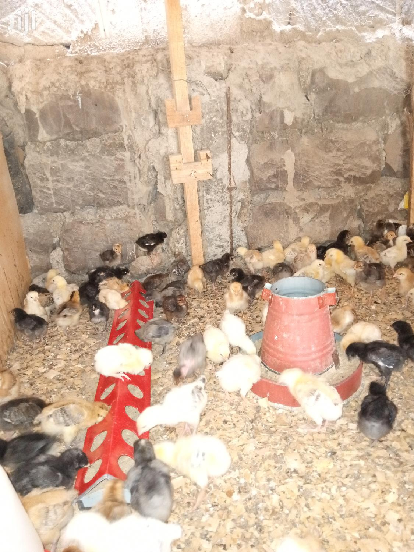 Archive: Improved Kienyeji Chicken