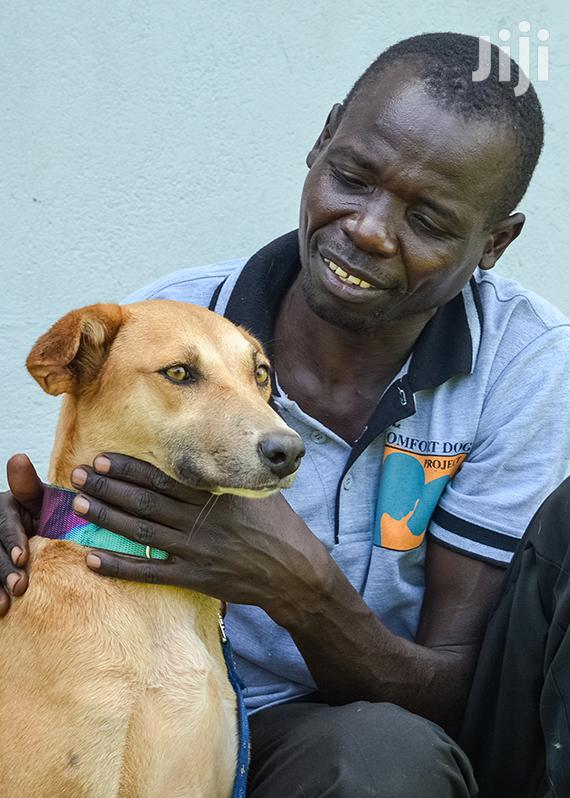 Bestcare Dog Washing & Grooming Call Us Today! Best Pet Grooming Co | Pet Services for sale in Westlands, Nairobi, Kenya