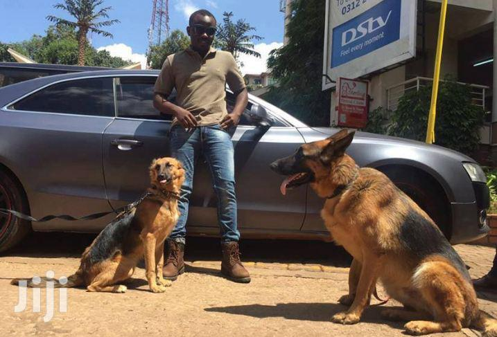 Bestcare Professional Grooming Service   Dog Walking And Cleaning   Pet Services for sale in Westlands, Nairobi, Kenya
