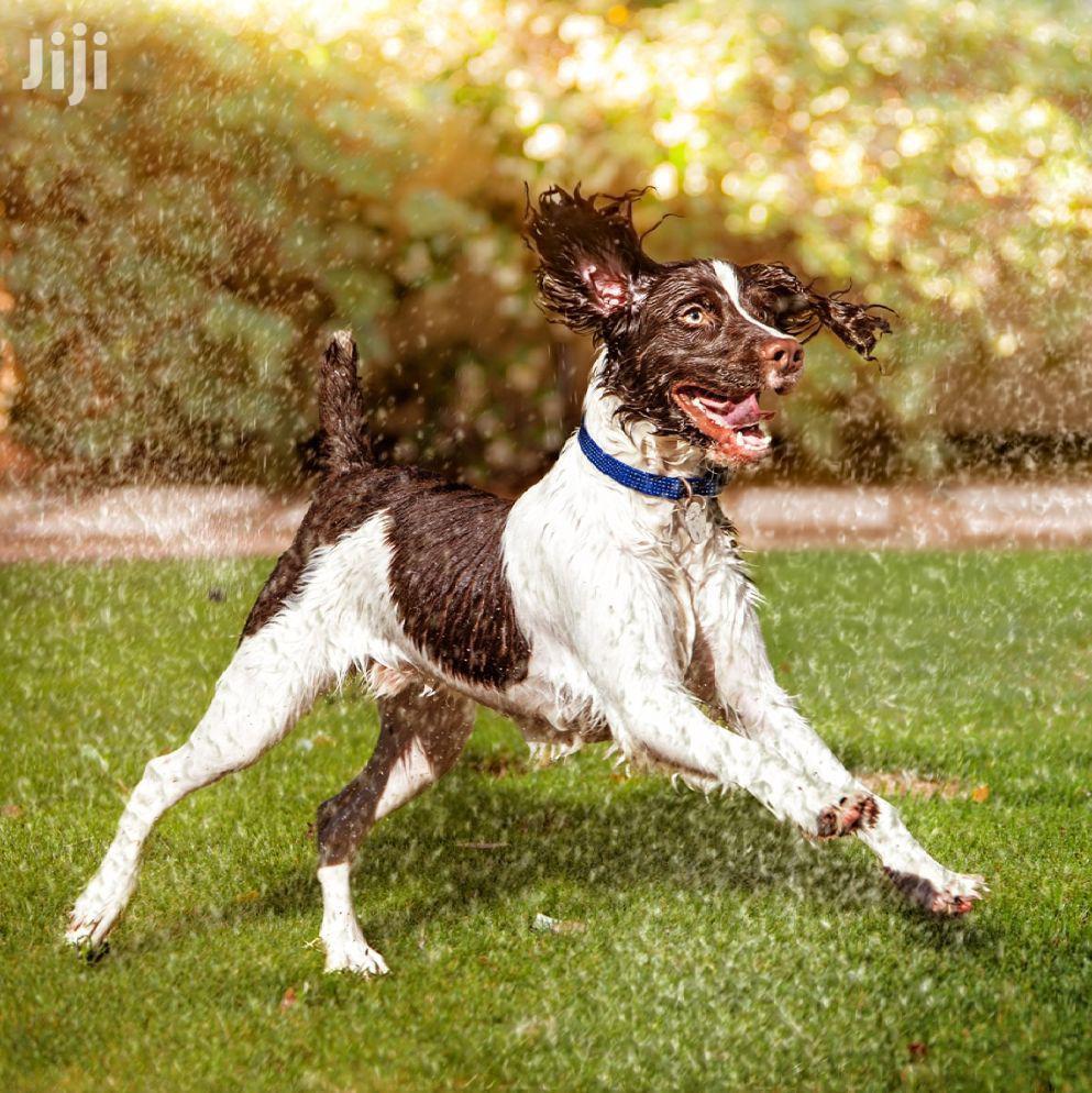 Dog Walking And Pet Sitting - Bestcare Pet Care Services | Pet Services for sale in Westlands, Nairobi, Kenya