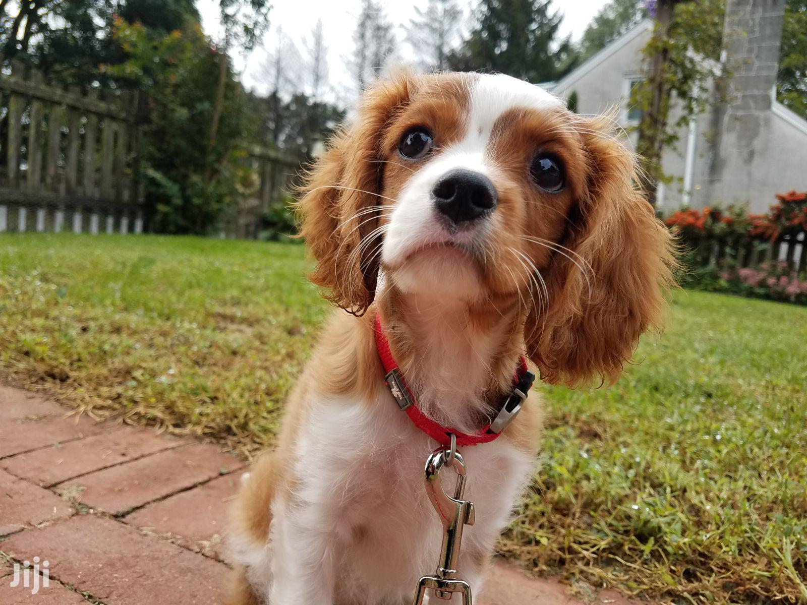 Bestcare Pet Services Dog Grooming Walking In Nairobi   Pet Services for sale in Westlands, Nairobi, Kenya