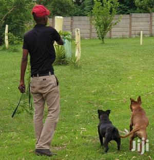 Bestcare Pet Services Dog Grooming Walking In Nairobi