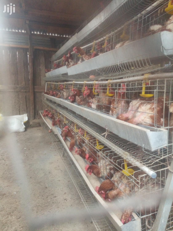 Chicken Cages And Equipments | Farm Machinery & Equipment for sale in Kamulu/Joska (Kasarani), Nairobi, Kenya